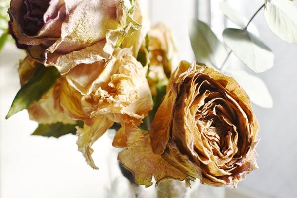 沖縄の花屋が閑散期に集客する方法について1